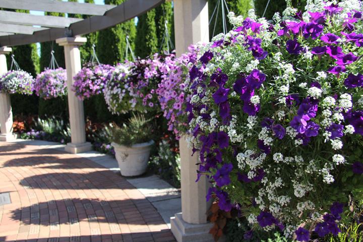 The Judith A. DeLapa Perennial Garden