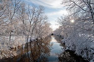 Snow-frosted trees line the Red Cedar River. Photo courtesy of Communications and Brand Strategy.